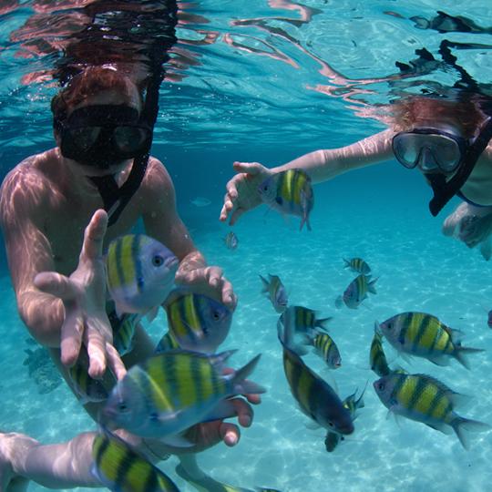 snorkel-yellow-fish